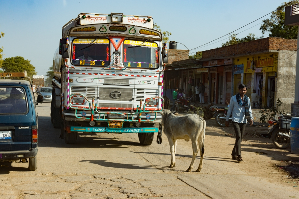 A cow stares down a truck